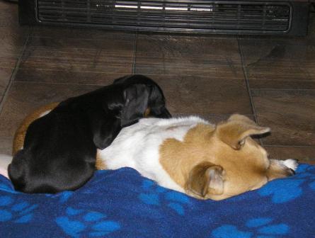 Dog Kennels For Sale Mandurah